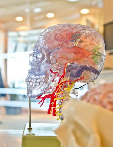 sclerosi-biotina-effetti
