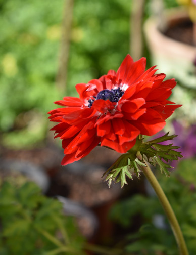 pollini-blog-farmaciapiubenessere,it-