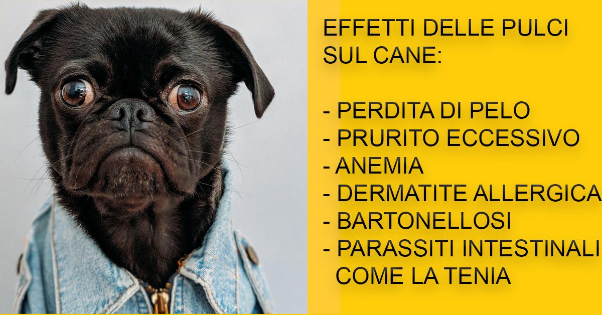 pulci-cane-rimedi-parassiti