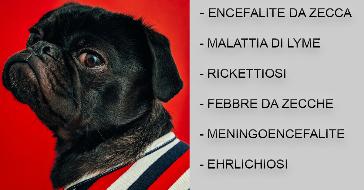 zecche-cane-rimedi-effetti