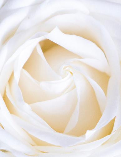 rosa-bianca-candidosi-rimedi
