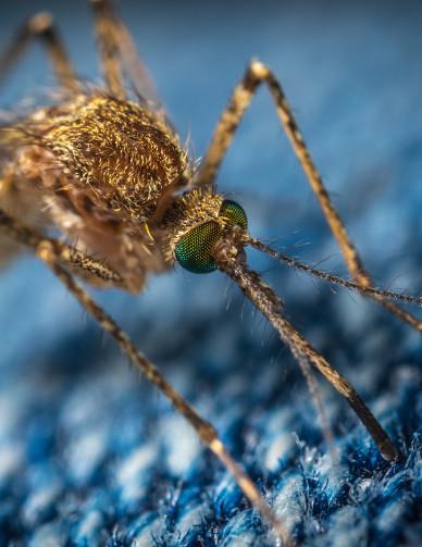 zanzare-repellenti-adulti-bambini